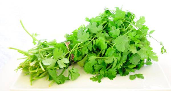 coriander for kidney filter