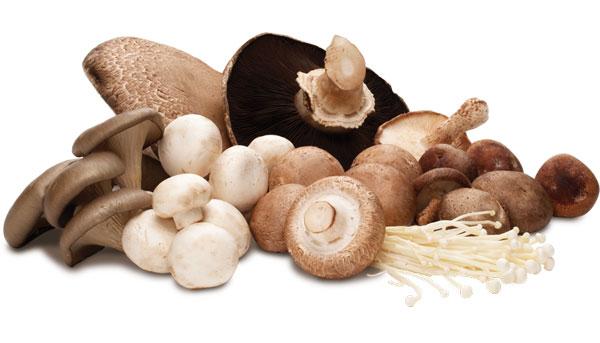 mushroom-benefits-in-hindi