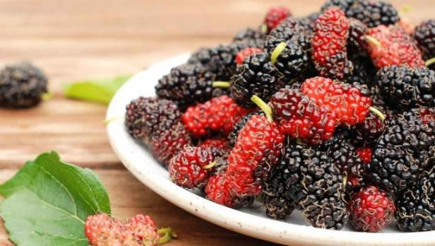 henefits-benefits-of-mulberry-in-hindi