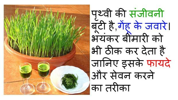 health-benefits-of-wheat-grass