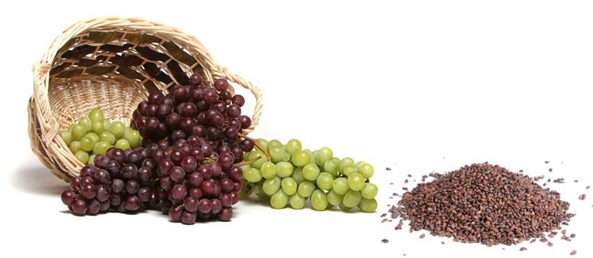 - grapes seeds benefits for cancer - सिर्फ 48 घंटे में हर तरह के कैंसर का सफाया, जानिए चमत्कारिक औषधि
