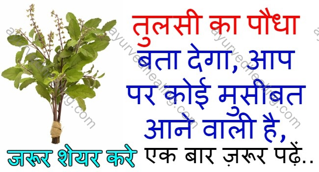 tulsi-remedies-in-hindi
