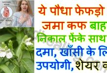 - malabar nut adusa benefits hindi 218x150 - आयुर्वेद हीलिंग